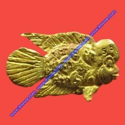 ปลาหล่อฮั่น เนื้อชนวน อ.เม้ง ขุนแผน (ปลาโชคลาภ)