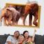 """สติ๊กเกอร์ติดผนังตกแต่งบ้าน 3D """"ช้าง Elephants"""" ความกว้าง 87 cm สูง 57 cm thumbnail 1"""