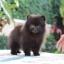 ปอมหน้าหมี เพศผู้ หน้าสั้น ขาใหญ่ สายเลือดดี ขนสวย อายุ 2 เดือนครับ ...แนะนำเข้าชมตัวจริงได้ที่ ลาดพร้าว 101 แยก 46 นัดล่วงหน้าอย่างน้อย 1-2 ชม. ได้ที่ Line : @heropom Tel : 0890888441 นะครับ thumbnail 2