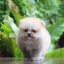 ปอมหน้าหมี เพศผู้ หน้าสั้น ตัวเล็ก สีส้ม ขาใหญ่ สายเลือดดี ขนสวย อายุ 2 เดือนครับ ...แนะนำเข้าชมตัวจริงได้ที่ ลาดพร้าว 101 แยก 46 นัดล่วงหน้าอย่างน้อย 1-2 ชม. ได้ที่ Line : @heropom Tel : 0890888441 นะครับ thumbnail 2