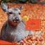 (แบ่งขาย 30 เม็ด)Wealthy Health Deer Placental 50,000 mg รกกวางที่สุดของอาหารเสริมต้านชรา เพิ่มพลัง ชะลอความแก่ thumbnail 3