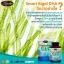 Smart Algal DHA 110.25 mg. อาหารเสริม บำรุงสมอง Auswelllife ขนาด 60 เม็ด จากออสเตรเลีย thumbnail 3
