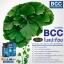 Auswelllife BCC (Brain and Cardio Care with Squalene & Ginkgo) วิตามินบำรุงสมอง และหัวใจ ขนาด 60 เม็ด จากออสเตรเลีย มีอย. thumbnail 4