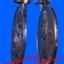 หมุนเงินหมุนทอง หลวงปู่หมุน ฐิตสีโล วัดบ้านจาน อ. กันทรารมย์ จ.ศรีสะเกษ ปี2542 เหรียญบาง thumbnail 5