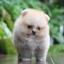 ปอมหน้าหมี เพศผู้ หน้าสั้น ตัวเล็ก สีส้ม ขาใหญ่ สายเลือดดี ขนสวย อายุ 2 เดือนครับ ...แนะนำเข้าชมตัวจริงได้ที่ ลาดพร้าว 101 แยก 46 นัดล่วงหน้าอย่างน้อย 1-2 ชม. ได้ที่ Line : @heropom Tel : 0890888441 นะครับ thumbnail 4