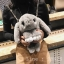 กระเป๋าเป้ น้องกระต่าย ขนปุย น่ารักมากคะ thumbnail 7