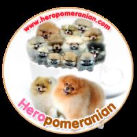 heropomeranians
